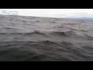 Выпрыгнул кит